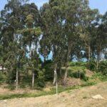Купить землю в Батуми